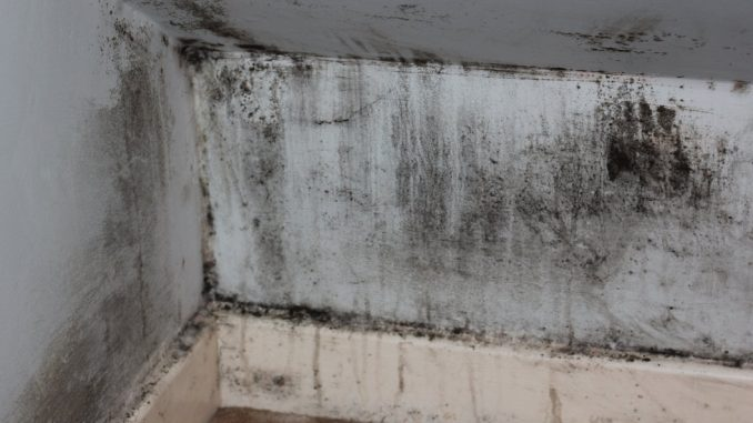 Mould is everywhere but lots of people remain unsure what it is or how to prevent it