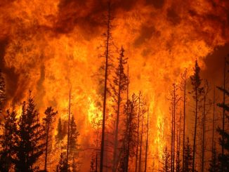 Wildfires have been linked with causing the contamination of drinking water through heating up plastic pipes so that chemicals leech into the water